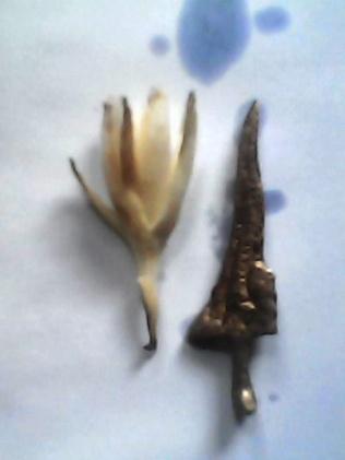 mustika kerejekian brojol naga